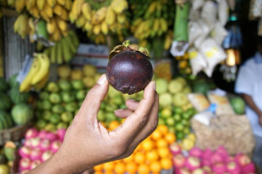 exotic fruit nutritional benefits-mangosteen fruit
