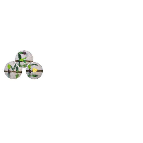 Anti-ageing-tips-logo