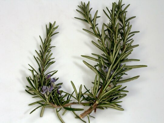 how-to-have-healthy-hair-naturally-rosemary