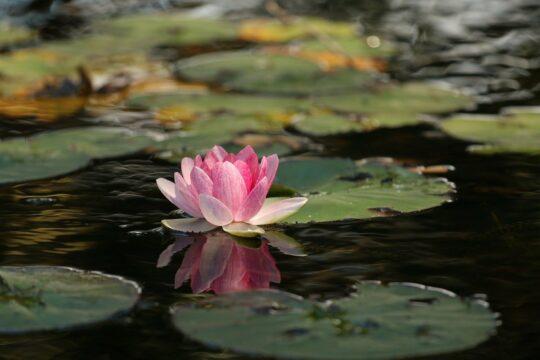 simple breathing exercises-lotus
