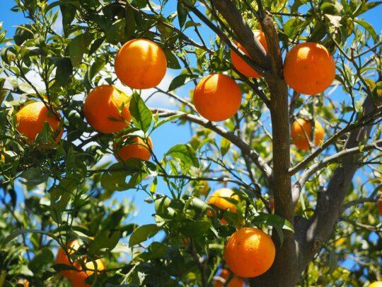top 10 anti aging foods-oranges